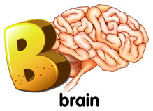 A letter B for brain Royalty Free Stock Photos