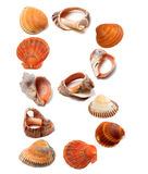 Letter B composed of seashells Royalty Free Stock Image