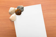 Letter from the beach. Seashells Stock Image