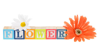 Letter blocks spelling flower with artificial flowers. Letter blocks spelling flower. Isolated on white Stock Photography