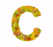 The letter C of alphabet made of autumn leaves Stock Photos