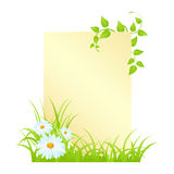 Letter with camomiles. Blank with camomiles and grass. Vector illustration, isolated on a white Stock Image