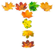 Letter A composed of autumn maple leafs Stock Images