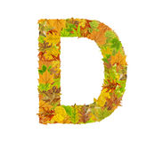 The letter D of alphabet made of autumn leaves Royalty Free Stock Photo