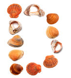 Letter D composed of seashells Royalty Free Stock Photo