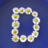 Letter D flowers alphabet. On a blue background stock image