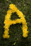 Letter A in dandelions Stock Photo