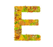 The letter E of alphabet made of autumn leaves Royalty Free Stock Images