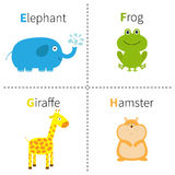 Letter E F G H Elephant Frog Giraffe Hamster Zoo alphabet. English abc with animals Education cards for kids White backgr. Ound Flat design Vector illustration stock illustration