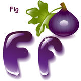 Letter F. Alphabet. English capital and uppercase letter F, stylized color of figs juice. figs with leaf. vector illustration Stock Photo