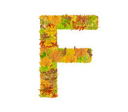 The letter F of alphabet made of autumn leaves Stock Photo