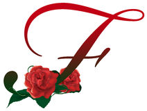 Letter F red floral  illustration. Red rose decorated Letter F font , colorful and Royalty Free Stock Image
