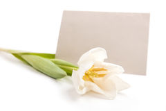 Letter with flower. Tulips with sheet of paper for romantic letter Stock Photos
