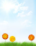 Letter frame made from flowers in grass. Royalty Free Stock Photography