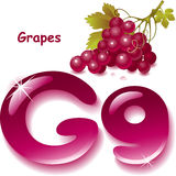 Letter G. Alphabet. English capital and uppercase letter G, stylized color of grapes juice. bunch grapes with leaf. vector illustration Royalty Free Stock Image