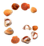Letter G composed of seashells Royalty Free Stock Photography