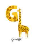 Letter G Stock Photography