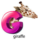 A letter G for giraffe Stock Images