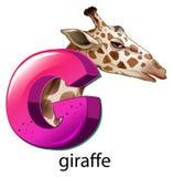 A letter G for giraffe Stock Images