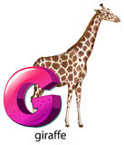 A letter G for giraffe Royalty Free Stock Photography