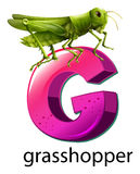 A letter G for grasshopper Royalty Free Stock Photography