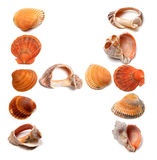 Letter H composed of seashells Stock Photos