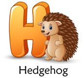 Letter H is for Hedgehog cartoon alphabet. Illustration of Letter H is for Hedgehog cartoon alphabet Stock Image
