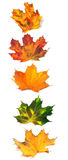 Letter I composed of autumn maple leafs Royalty Free Stock Images