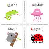 Letter I J K L  Iguana Jellyfish Koala Ladybug Zoo alphabet. English abc with animals Education cards for kids  White back. Ground Flat design Vector Royalty Free Stock Photos