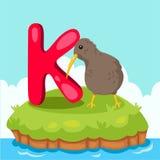 Letter'K的以图例解释者是为猕猴桃bird 库存照片