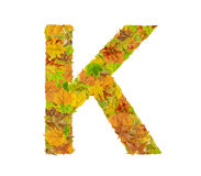 The letter K of alphabet made of autumn leaves. Close Royalty Free Stock Image