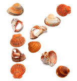 Letter K composed of seashells Royalty Free Stock Image