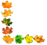 Letter L composed of autumn maple leafs Royalty Free Stock Photography