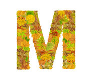The letter M of alphabet made of autumn leaves. Close Royalty Free Stock Images