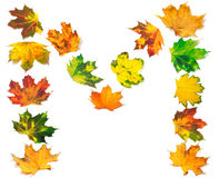 Letter M composed of autumn maple leafs Stock Image