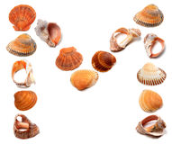 Letter M composed of seashells Stock Photography