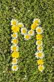Letter M flower alphabet. Letter M from complete flower alphabet royalty free stock photo