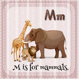 Letter M. Illustration of a letter M is for mammals Royalty Free Stock Photography