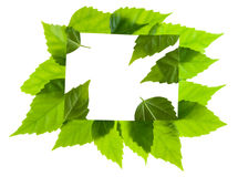 The letter message from green leaves Stock Photography