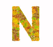The letter N of alphabet made of autumn leaves. Close Royalty Free Stock Photography