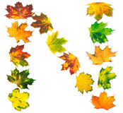 Letter N composed of autumn maple leafs Stock Photo