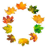 Letter O composed of autumn maple leafs Stock Photo