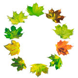 Letter O composed of multicolor maple leafs Stock Photos