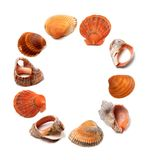 Letter O composed of seashells Royalty Free Stock Photography