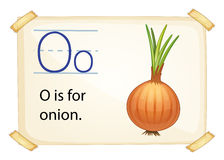 A letter O for onion Stock Photo