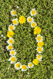 Letter OE flower alphabet. Letter OE from complete flower alphabet royalty free stock photography