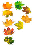 Letter P composed of autumn maple leafs Royalty Free Stock Images