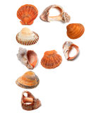 Letter P composed of seashells Royalty Free Stock Photos