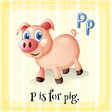Letter P. Flashcard letter P is for pig with yellow background royalty free illustration