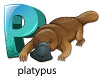 A letter P for platypus royalty free illustration